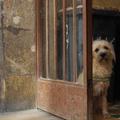 Kutyák a nagyvárosban 1.