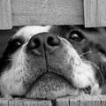 Itt az idő: amire egy kutyának a legnagyobb szüksége van