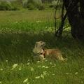 A félelem szaga megnehezítheti a kutyáknak, hogy megtalálják a keresendő személyt