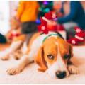 Kutyák és ünnepek