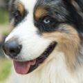 A kutyákkal kapcsolatos tudomány jobb, mint a józan ész