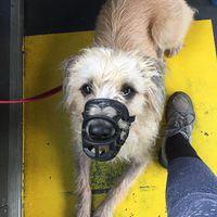 Így utazik egy jól nevelt kutya, betartva a tömegközlekedési eszközökön elvárt szabályokat