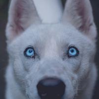 Felismered, ha egy kutya fél?