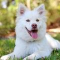 A legfontosabb tipp kutyák képzésével kapcsolatban