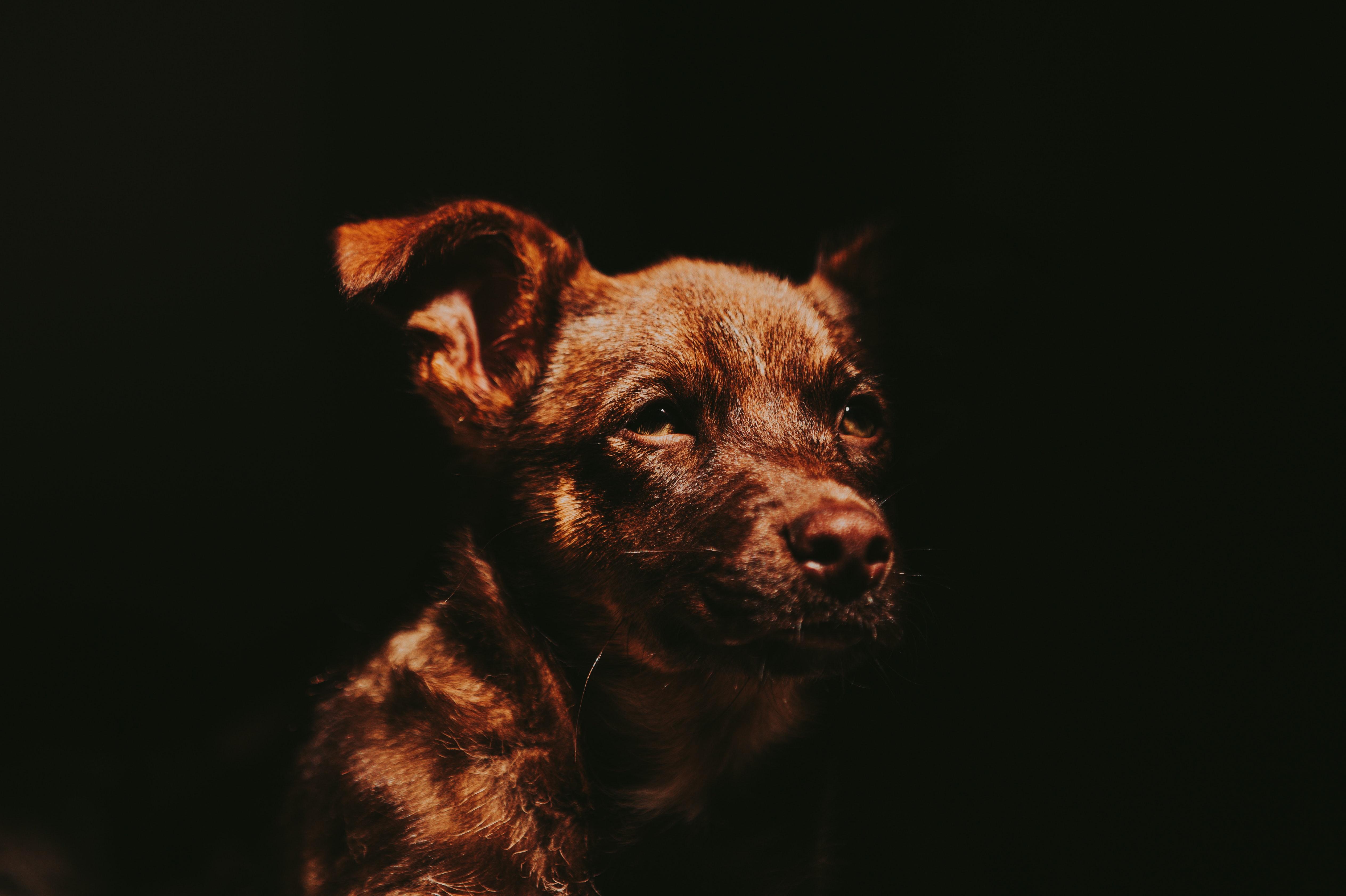 adorable-animal-animal-photography-1380677.jpg