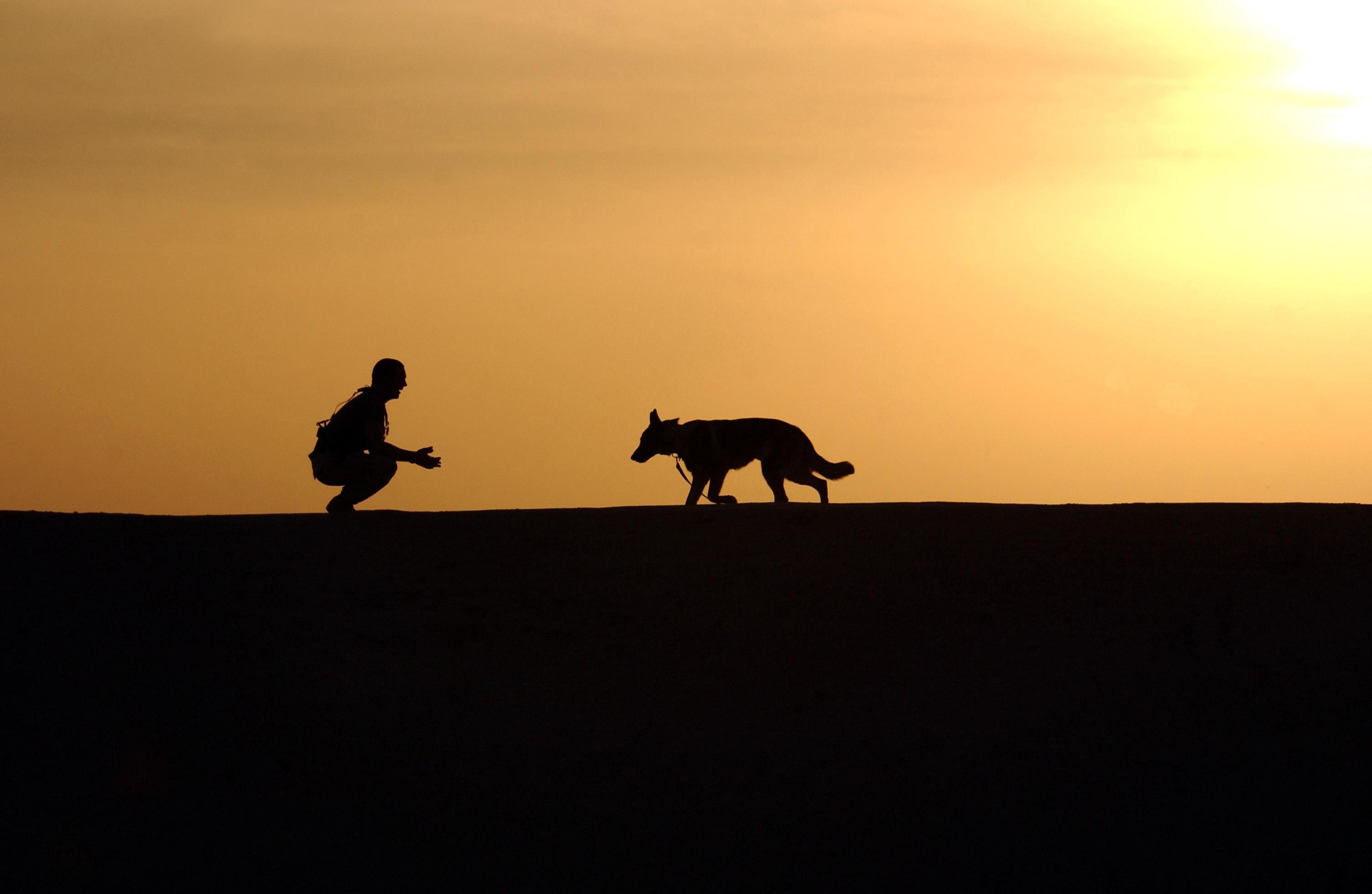 dog-trainer-silhouettes-sunset-38284.jpeg
