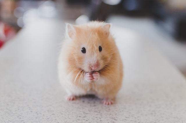 hamster-690108_640.jpg