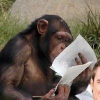 Vizsgázó csimpánzok és egyéb rövidhírek
