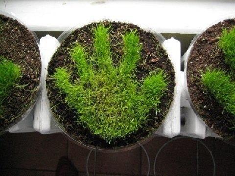 grass-handprint_1.jpg
