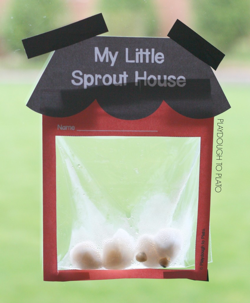 my-little-sprout-house-848x1024_1.jpg