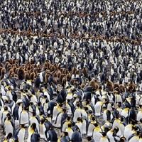 Paul Nicklen - Természetfotó