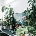 Legyen még zöldebb az irodád