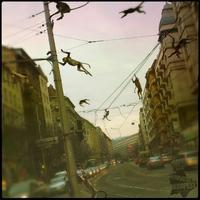 A nap képe: ugrándozó majmok a Margit körúton