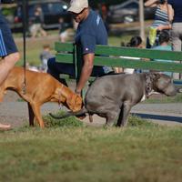6  kreatív, kutyaszartalanítást serkentő módszer a nagyvilágból