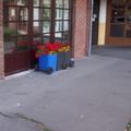 Nap képe: szemétvirágok Sopronban