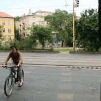 Kobra, a kerékpáros zebra. Adjunk állatnevet a veszélyes biciklis átkelőhelynek!