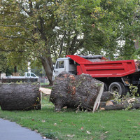 Rogán sem tudott az Olimpiai parkban történt favágásról - FRISSÍTVE furcsasággal!!!