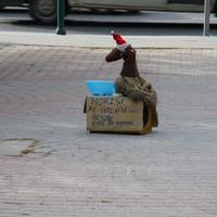 A nap képe: Morzsi, a hajléktalan műkutya koldul a Széna téren