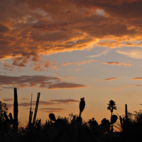 Arizona városai - Tucson