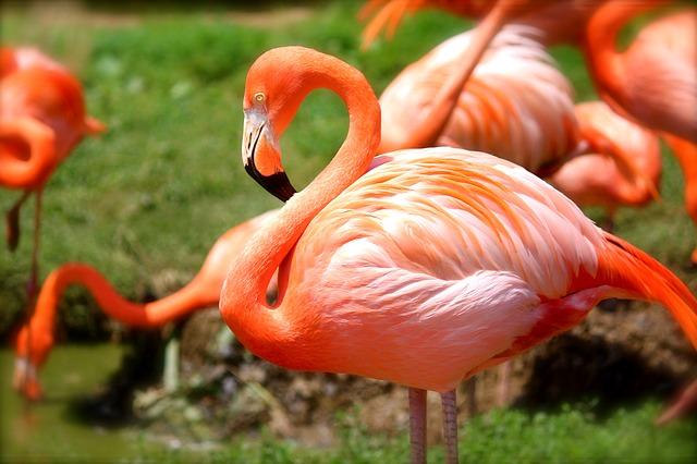 flamingo-635700_640.jpg