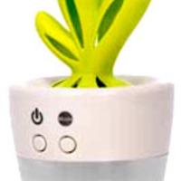 Illóolaj párologtató kaktusz