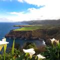 Azori-szigetek illata
