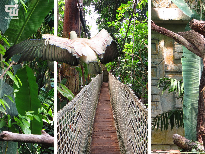 02_zoo_zlin_yucatani_tropicarium_allatkert_vadaspark_csehorszag_esko_czech_republic_utazas_europaba.jpg
