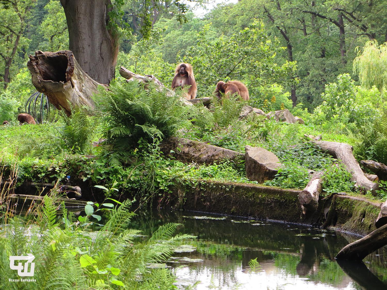 07_zoo_zlin_hegyi_pavian_allatkert_vadaspark_csehorszag_esko_czech_republic_utazas_europaba.JPG