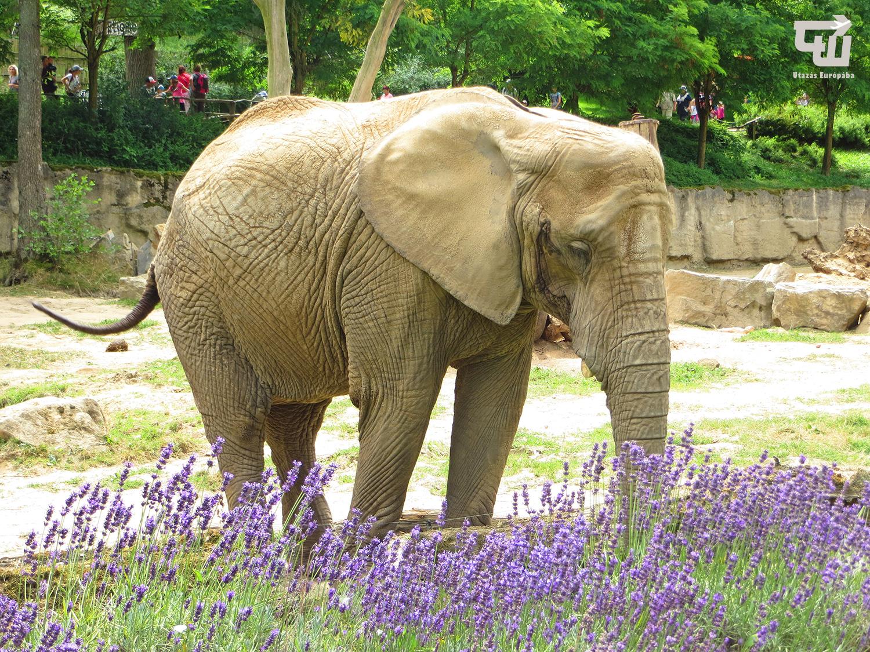 08_zoo_zlin_afrikai_elefant_allatkert_vadaspark_csehorszag_esko_czech_republic_utazas_europaba.JPG