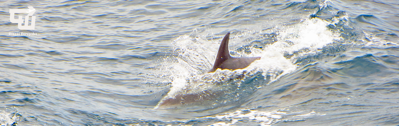 07_gorogorszag_greece_griechenland_makedonia_chalkidiki_delfin_dolphin.jpg