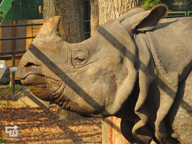 01_orrszarvu_nyiregyhazi_allatpark_magyarorszag_hungary_ungarn_zoo_allatkert_vadaspark_utazas_europaba.jpg