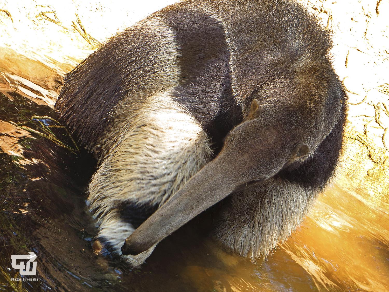 07_sorenyes_hangyasz_jaszberenyi_allat-_es_novenykert_magyarorszag_hungary_ungarn_zoo_allatkert_vadaspark_utazas_europaba.JPG