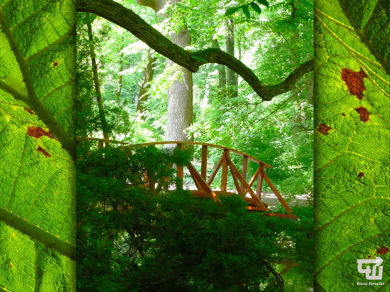 10_nemzeti_botanikus_kert_vacratot_national_botanical_garden_magyarorszag_hungary_ungarn_utazas_europaba.jpg