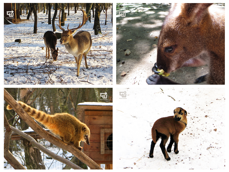 03_magyarorszag_hungary_ungarn_nyirjesi_fuveszkert_es_vadaspark_kenguru_kangaroo.jpg