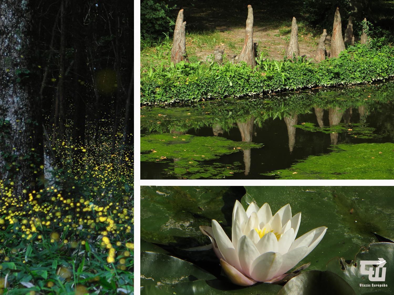 02_alcsuti_arboretum_szentjanosbogar_magyarorszag_hungary_ungarn_utazas_europaba.jpg