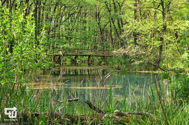 03_tatai_fenyes_tanosveny_termeszetvedelmi_terulet_nature_reserve_magyarorszag_hungary_ungarn_utazas_europaba.JPG