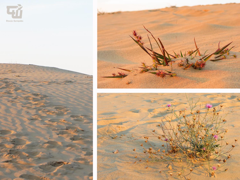 03_fulophazi_homokdunek_sivatag_desert_magyarorszag_hungary_ungarn_utazas_europaba.jpg