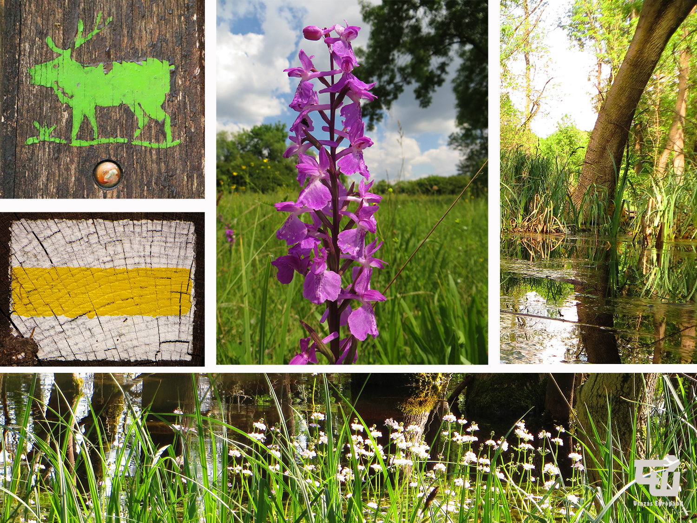 06_ocsai_selyem-ret_orchidea_orchid_bekaliliom_magyarorszag_hungary_ungarn_utazas_europaba.jpg