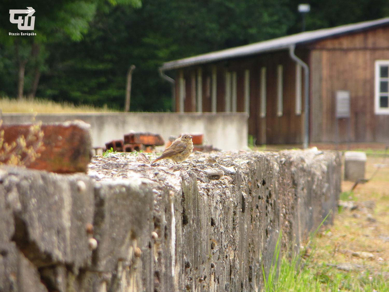 04_buchenwald_koncentracios_tabor_kz-gedenkst_tte_memorial_nemetorszag_germany_deutschland_ii_vilaghaboru_wwii_utazas_europaba.JPG