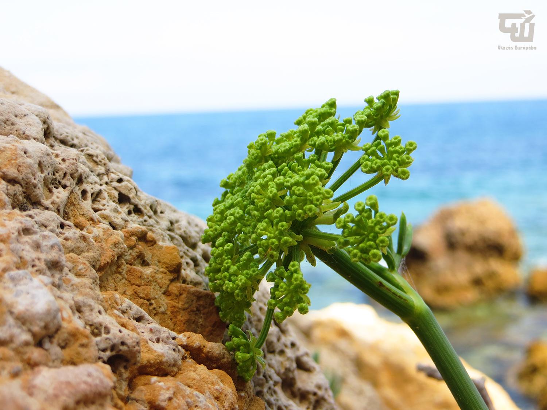 15_porto_ercole_monte_argentario_tengerpart_beach_spiaggia_toszkana_tuscany_toscana_olaszorszag_italy_italia_utazas_europaba.JPG