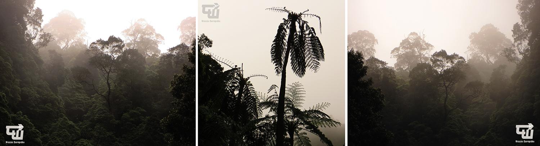 07_caldeira_velha_oserdo_tree_fern_azori-szigetek_s_o_miguel_azores_portugalia_portugal.jpg