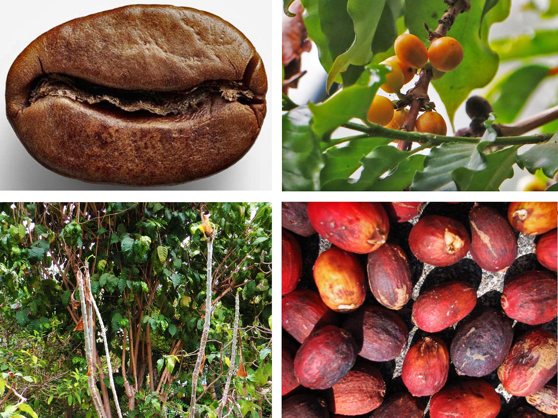 12_cafe_nunes_kave_coffee_faj_dos_vimes_s_o_jorge_azori-szigetek_azores_portugalia_portugal.jpg