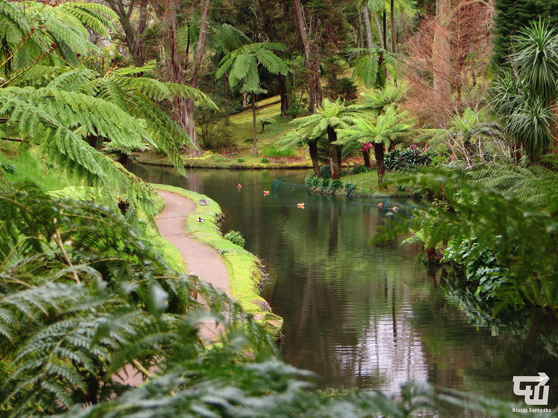 05_furnas_terra_nostra_tree_fern_azori-szigetek_s_o_miguel_azores_portugalia_portugal.jpg