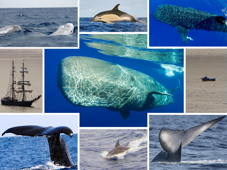 02_balna_whale_delfin_dolphin_atlanti-ocean_oceano_azori-szigetek_s_o_miguel_azores_portugalia_portugal.jpg