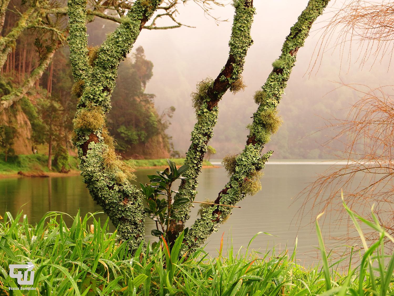 09_lagoa_verde_sete_cidades_azori-szigetek_s_o_miguel_azores_portugalia_portugal.JPG