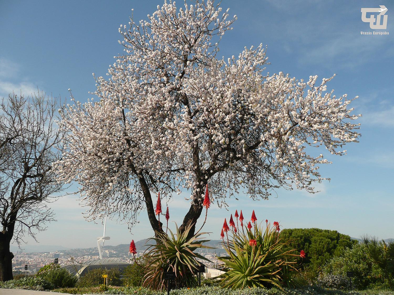 02_barcelona_jardi_botanic_katalonia_catalu_a_spanyolorszag_spain_espa_a_spanien.JPG