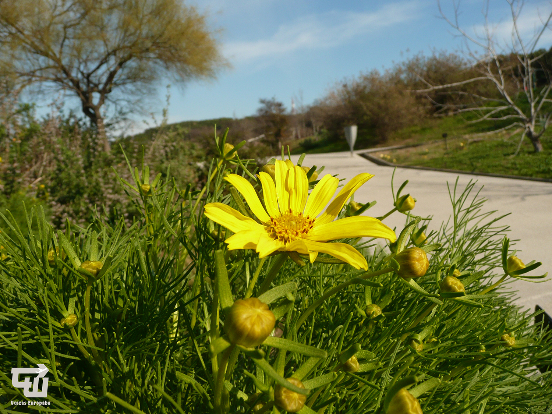 03_barcelona_jardi_botanic_katalonia_catalu_a_spanyolorszag_spain_espa_a_spanien.JPG