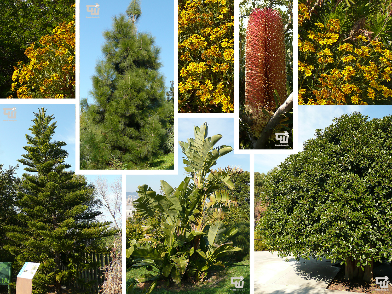 05_barcelona_jardi_botanic_katalonia_catalu_a_spanyolorszag_spain_espa_a_spanien.jpg