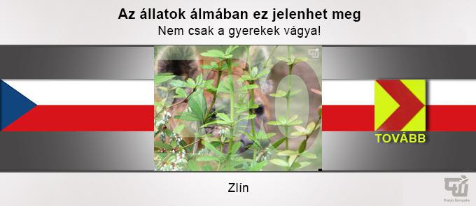 uticelok_zlin.jpg