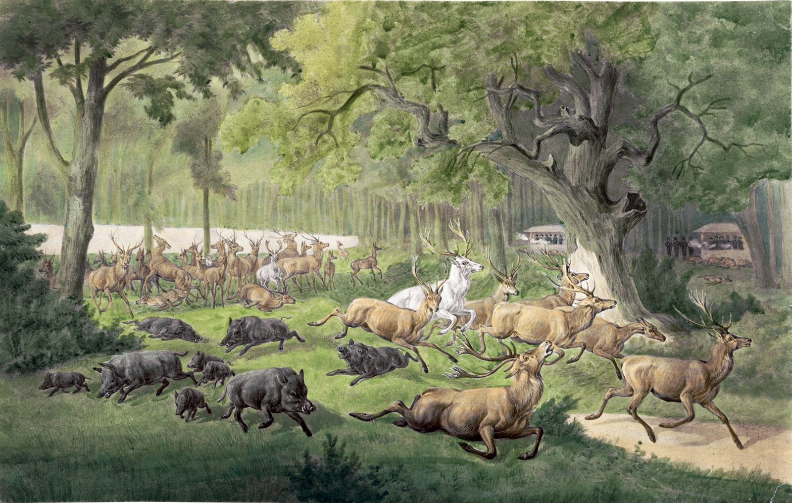 Esterházy híres vadaskertje, ahol egy nap alatt 1200 vadat lőttek ki...
